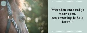 paardencoaching noor-nederland, paardencoaching drenthe, paardencoaching groningen