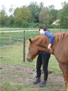 paardencoachinggroningen