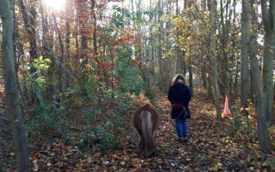 Mijn ervaring met coaching met paarden bij Coaching by Mirte