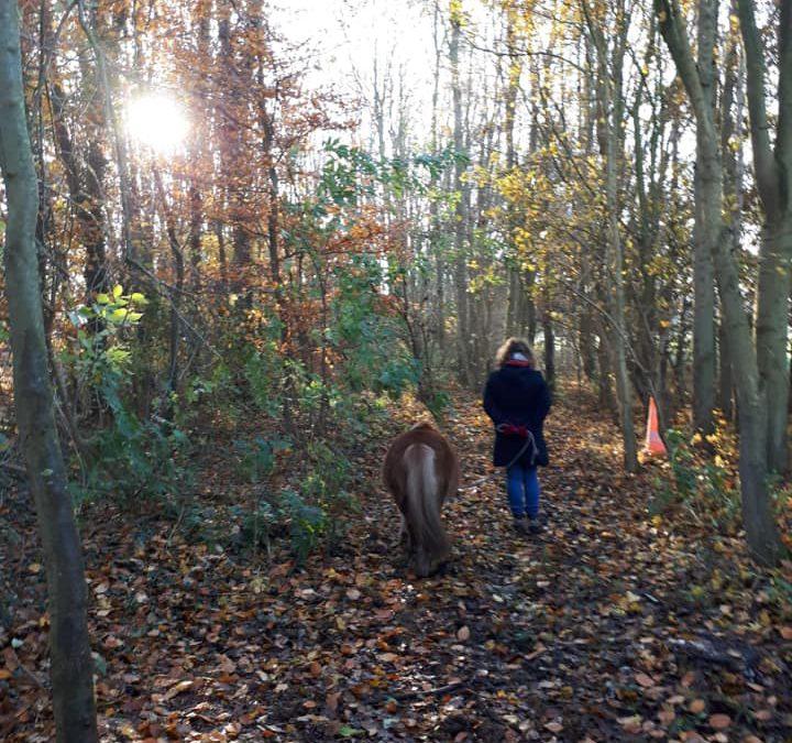 Sandra's ervaring met paardencoaching